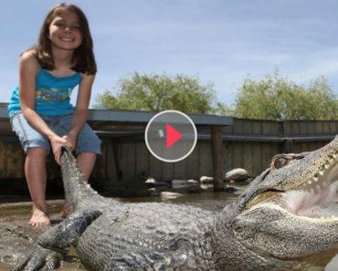 girl vs alligator