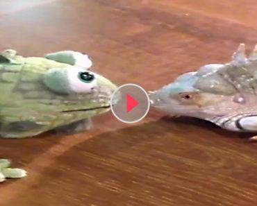 terrifying iguana