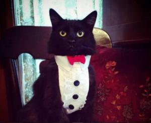 funny faces adorable black cat