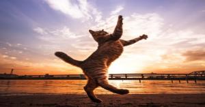 18 cats photos