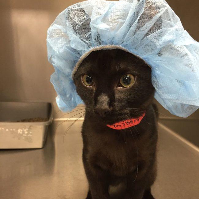 best vet in the world
