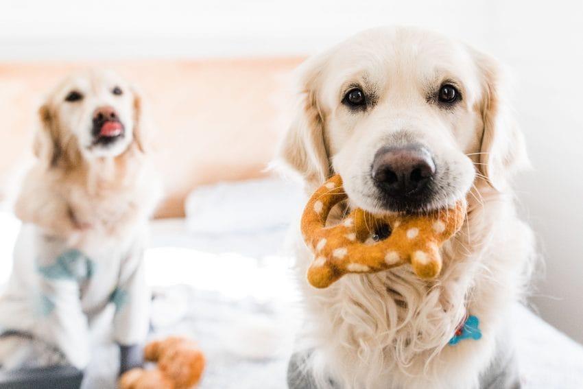 Keeping Pets Healthy
