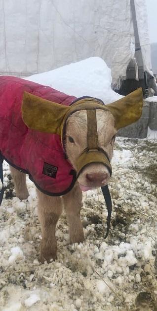 Warming Ear flaps
