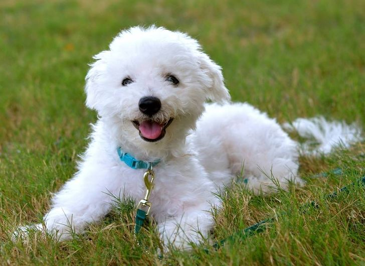 Choosing The Best Dog