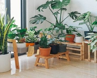 Indoor plants Has Pleasant Scent in Every Room in Your Home. Refreshing to Read.