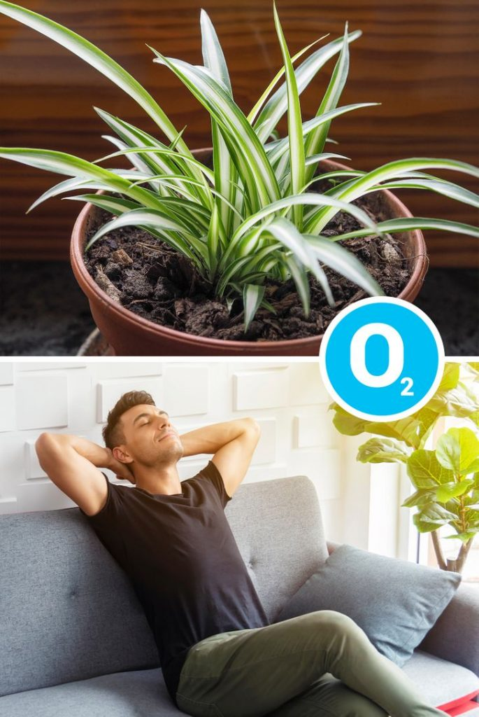 Indoor Plants That Are Good for Your Health