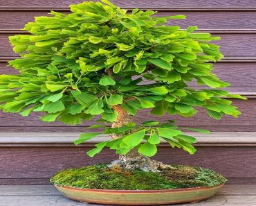 Plants with Health Benefits