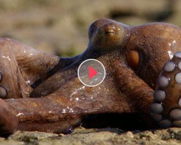 octopus lying