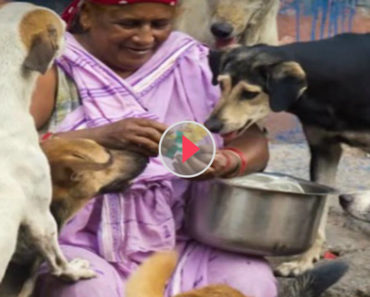 400 stray dogs