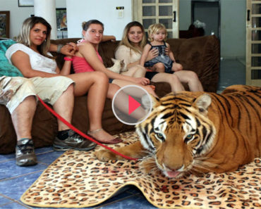 family-risked-their-lives-with-tigers
