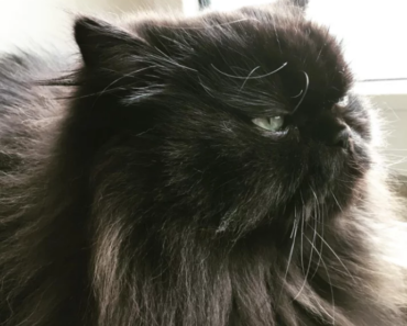 adorable funny faces of black cat